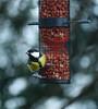 koolmees (maar73) Tags: parusmajor maar73 bird vogel koolmees sonydscrx10m3 food explore