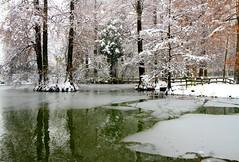 A winter day (annalisabianchetti) Tags: winter inverno forest trees alberi snow neve water ice ghiaccio paesaggio landscape