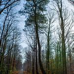 Forêt de Longuenée thumbnail