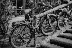 snow-covered bike (genelabo) Tags: snow covered velo bike fahrrad bulls bicyle radl münchen munich schnee fasanerie bw sw black white schwarz weiss stairs treppen january