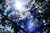 ILCE-7M2-02213-20180209-1305 // Konica Hexanon AR 50mm 1:1.7 (Otattemita) Tags: 50mmf17 florafauna hexanon konica konicahexanonar50mmf17 fauna flora flower nature plant wildlife konicahexanonar50mm117 sonyilce7m2 ilce7m2 sony cnaturalbnatural 50mm
