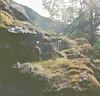 Close to a river. 2017 (amelia.seddon) Tags: rolleiflex flare tree mountain life ektar kodak film mediumformat squareformat norway nature verdant green moss rock light lucent fecund