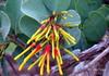 Cerrado´s flower (✿ Graça Vargas ✿) Tags: flower graçavargas ©2018graçavargasallrightsreserved flordocerrado cerrado´sflower wild 13607160218