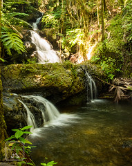 Onomea Falls (fentonphotography) Tags: botanicalgarden hawaii waterfall papaikou unitedstates us onomeafalls longexposurephotography rushingwater moss rocks ferns