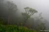 "ZA - Drakensberge (Ineound) Tags: southafrica südafrika olympus1250mmf3563 olympusm1250mmf3563 f3563 mzd1250 mzuikodigitaled1250mmf3563ez olympus1250mm 1250 1250mm makro macro olympus micro four thirds mft m43 microfourthirds omd em5 μ43 ""spiegelblickde"" spiegelblickde spiegel blick landscape landschaft natur nature"