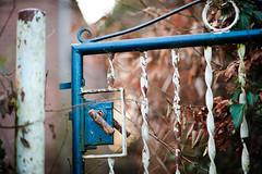 Nobody's Home (Ir3nicus) Tags: 85mm14g ausen blätter bokeh eingangstor geringeschärfentiefe rost tor zauntor alt geldern nordrheinwestfalen deutschland de afsnikkor85mm114g nikon d700 dslr fullframe fx outdoor leaves gate türklinke doorhandle shallowdepthoffield rust old germany