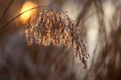 IMG_7413 (geraldtourniaire) Tags: bokeh licht nature natur canon schärfentiefe ef28100lmacroisusm eos6d 6d 100l
