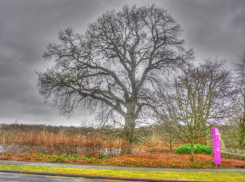 Tree_Westwood Business Park_Canley_Coventry_Feb18