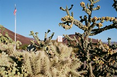 14711105_10157659763195154_8034528216441944667_o (LivCDavis) Tags: deathvalley oasis cactus om2