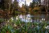 Upper Pond (Tony Shertila) Tags: eglwysbachcommunity eglwysfâch gbr geo:lat=5323435254 geo:lon=379984639 geotagged unitedkingdom wales europe britain bodnant nationaltrust flower snowdrops lake pond trees garden estate