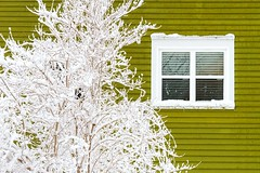 White & Green (Karen_Chappell) Tags: white snow green window house home paint painted wood wooden clapboard downtown city urban canada stjohns jellybeanrow tree winter atlanticcanada avalonpeninsula eastcoast newfoundland nfld