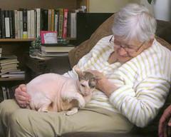 Nana With Max (edenpictures) Tags: kathleen nana max cat cornishrex
