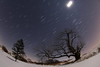 Moonlight and the Old Tree (Radical Retinoscopy) Tags: winter snow moonrise constellations astronomy astrophotography starstax moonlight startrail wideangle canont6s canon815mm fisheye
