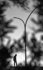 F_47A8784-1-BW-1-Canon 5DIII-Tamron 28-300mm-May Lee 廖藹淳 (May-margy) Tags: 心情的故事 maymargy bw 黑白 人像 街燈 剪影 樹木 樹葉 模糊 散景 街拍 streetviewphotography 線條造型與光影 linesformandlightandshadow 天馬行空鏡頭的異想世界 mylensandmyimagination 心象意象與影像 naturalcoincidencethrumylens 台東市 台灣 中華民國 taiwan repofchina f47a87841bw1 portrait tree leaves streetlamp bokeh blur silhouette 岸 海岸線 shoreline taitungcounty canon5diii tamron28300mm maylee廖藹淳