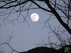 Goodbye, January ... ... ... ... ... ( FAVES STOP !! ) (ljucsu) Tags: january januarysky moon fullmoon januaryevening outdoor trees silhouettes treesilhouettes ngc