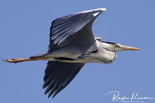 Wildlife @ Pulicat Lake, India