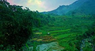 INDONESIEN, Java , Teeplantagen am Puncak-Pass, grüne Terrassen, 17125/9613