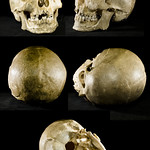 Homo sapiens thumbnail