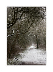 Winter Trail (Steve-T201) Tags: snow southwelltrail nottinghamshire trees