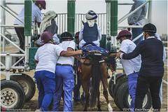 IMG_7045 copy (Services 33159455) Tags: qatar doha horse racing qrec emir horseracing raytohgraphy