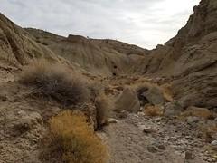 20180210_094653 (jason_brez) Tags: california canyon desert nature
