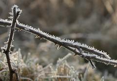 Ice (Schagie) Tags: winter tak ijs ice natuur nature landscape landschap mooi beauty ochtend dew frozen morning