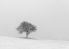 My tree (chrismarr82) Tags: nikon d750 snow winter tree home white black landcsape