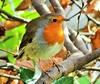 Robin in the woods (seanwalsh4) Tags: robin nature closeup bristol song songbird red beautiful common woods wednesdaysmacroorcloseup