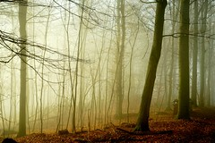 GetYourGold (BphotoR) Tags: bphotor fog forest december germany