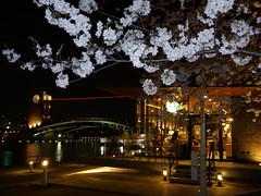 Night Cafe (yukky89_yamashita) Tags: starbucks cafe 富山市 富岩運河環水公園 spring 桜 さくら