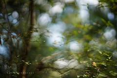 Frescor (Daniela Romanesi) Tags: 02618 florestinha forest green nature natural leaf leaves folhas folhagem carlzeisss 50mm planar f14 zeissplanart1450