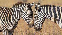 Nairobi-Nationalpark-0306 (ovg2012) Tags: kenia kenya nairobi nairobinationalpark