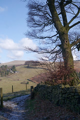 Nice day for a walk (Blue Pelican) Tags: path tree fields hills glossop derbyshire