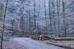 DSC_6165 Silvester (Charli 49) Tags: charli nature naturfotografie landschaft landscape wald winter holz raureif