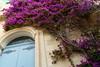 A dash of Colour (Hythe Eye) Tags: mdinamalta silentcity oldtown flowers bougainvillea
