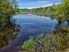 Blackwater Pond (mahler9) Tags: blackwaterpond pond capecod provincetown provincelands jaym june 2017 reflection spiegelung tükörkép reflet