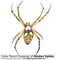 Garden Spider with Color Pencils [Time Lapse] (drawingtutorials101.com) Tags: yellow garden spider black writing corn mckinley spiders archnids sketch sketches draw drawing drawings color colors coloring pencil pencils how timelapse video speed