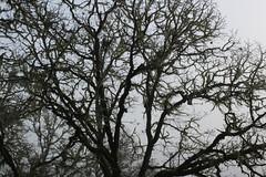 Web of branches (rozoneill) Tags: north bank dear management area habitat roseburg glide wilbur blm umpqua river oregon hiking