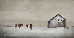 Best Friends Forever (sharon o*brien huey) Tags: cows barn farm snow winter landomakebelieve sharonobrienhuey magical realism fairytale texture photoart