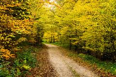 20171114-DSC06008 (Andreas BL) Tags: hagen hagensã¼d herbst landschaftfotografie laub natur outdoor