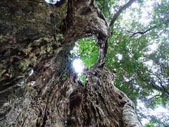 in Ingeli Forest, KwaZulu-Natal