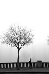 Tree, girl ... (jaume zamorano) Tags: 7dwf blackandwhite blancoynegro blackwhite blackandwhitephotography boira brouillard bw blackandwhitephoto d5500 fog foggy lleida monochrome monocromo mist minimalism nikon noiretblanc nikonistas niebla street streetphotography streetphoto streetphotoblackandwhite streetphotgraphy urban urbana