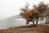River and fog, landscape. (Fencejo) Tags: canon600dt3ikissx5 tamronspaf1750mmf28xrdiiild landscape nature river fog ebro cs3 zaragoza
