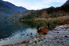 A cold morning (annalisabianchetti) Tags: cold freddo ice ghiaccio winter inverno lake lago vallecamonica water acqua paesaggio landscape