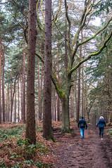 Rushmere Park Walk - January 13th 2018 (Trackside70) Tags: rushmerepark leightonbuzzard bedfordshire england uk winter walk scenery park dog woodland trees january 2018 garywalton nikond300s nikkor35mmf18