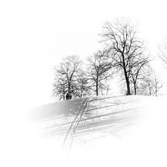 fun in the snow (koaxial) Tags: pc296195p1ma koaxial highkey bw schwarzweiss blackandwhite snow schnee trees bäume kinder kids fun sports sleigh schlitten