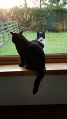 Inside out (mootzie) Tags: cats pets glass window inside outside blacl ledge