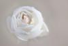 joyau blanc (christophe.laigle) Tags: rose christophelaigle pluie gouttes blanche fleur macro drops nature tendresse fuji blanc flower raindrops xpro2 xf60mm white