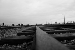 Never again. In memory of Victims of the Holocaust. 73rd Anniversary of Liberation of Auschwitz-Birkenau. (Katarzyna Aleksandra) Tags: auschwitz birkenau 73 anniversary inmemoryof black white victims holokaust weremember liberation neveragain