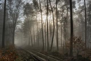 *Wintermorgen im Eifelwald*